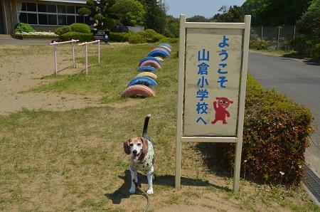 20190511山倉小学校26