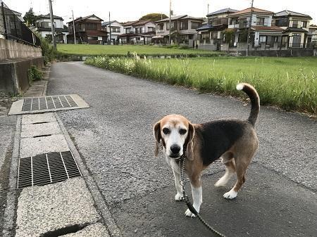 20190529散歩09