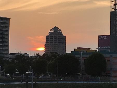 20190606コスモス大橋19