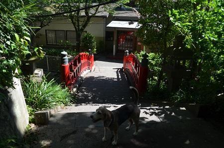 20190611片瀬小学校江の島分校01