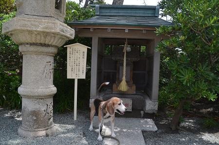 20190611森戸神社12