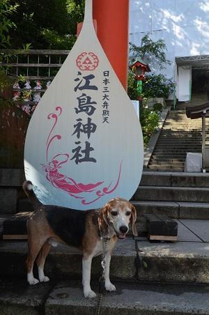 20190611江の島神社06