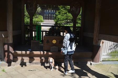 20190611江の島神社35