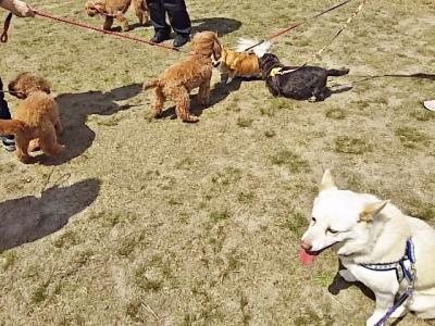 狂犬病注射2019
