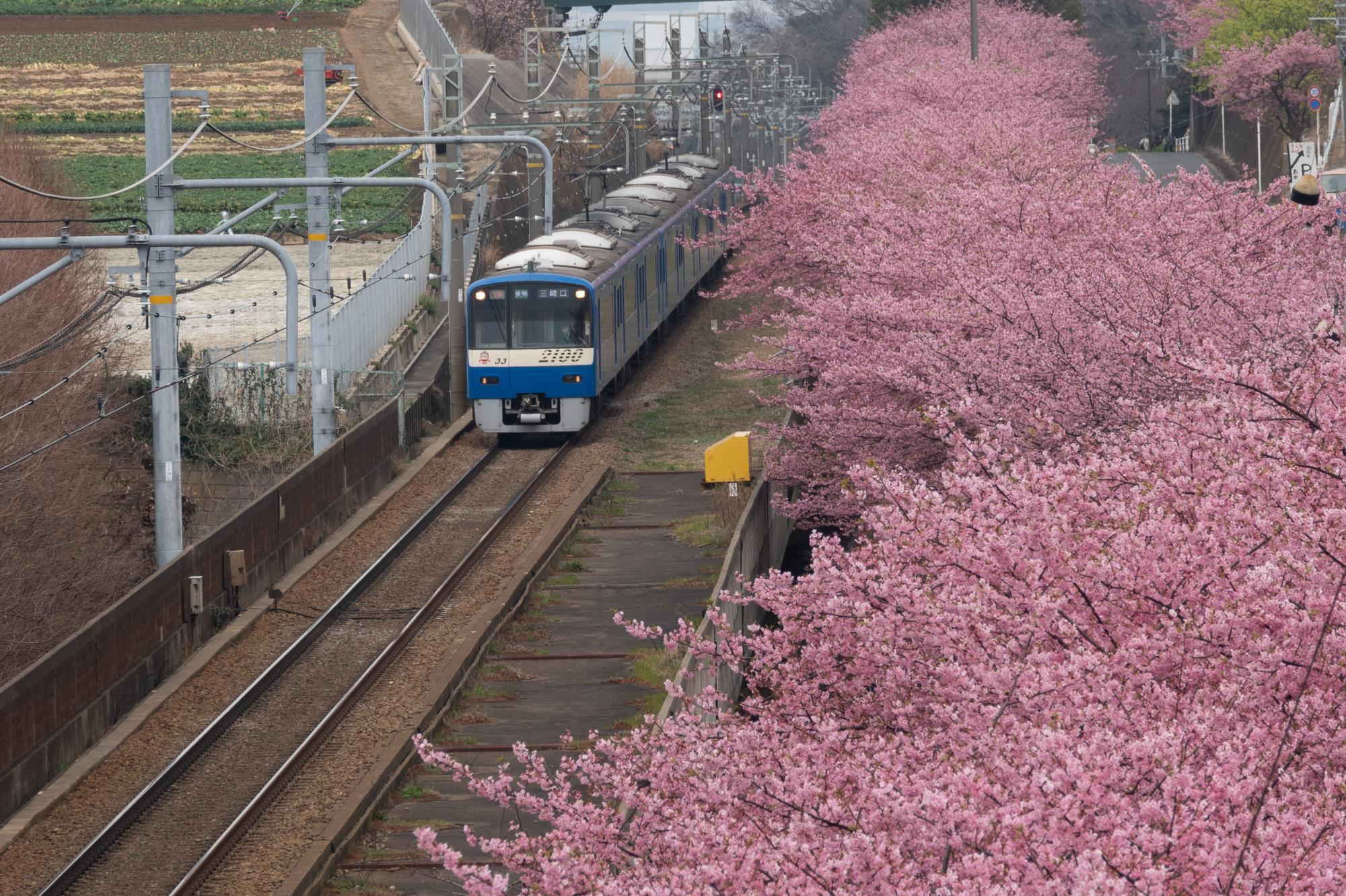 20190226-京急5
