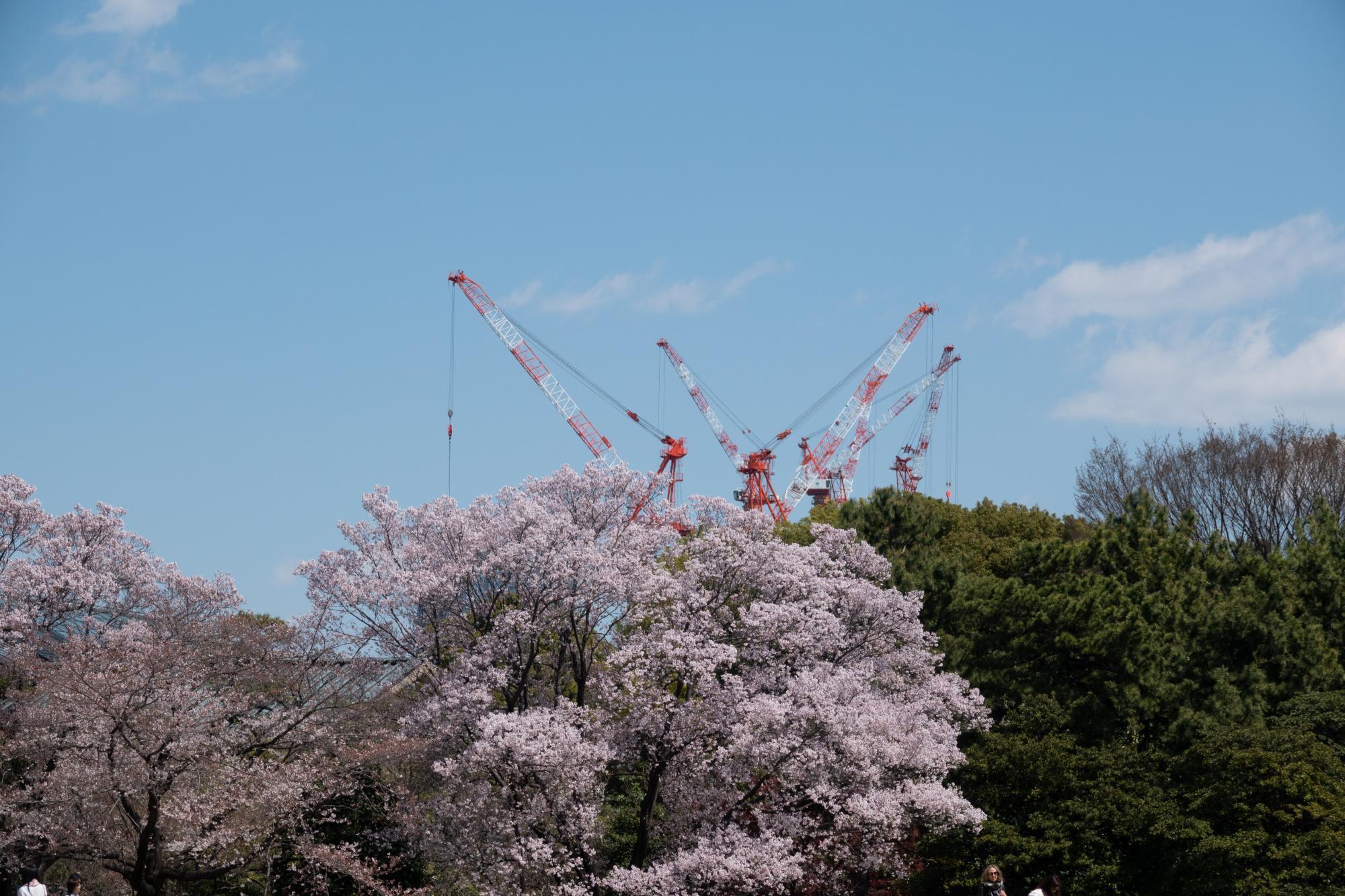 20190402-桜内2
