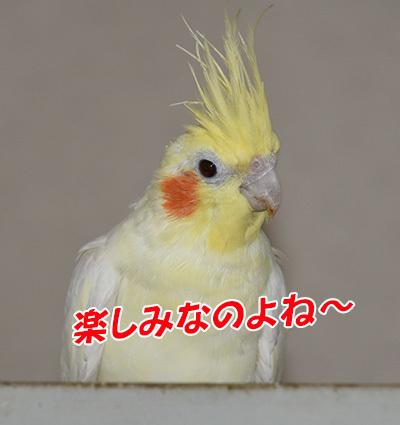 6_ノンちゃん