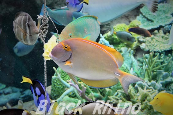 ニセカンランハギ01 名古屋港水族館