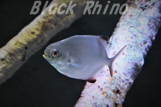 マルコバン01 竹島水族館