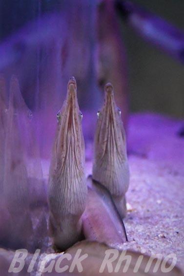 ダイナンウミヘビ02 ウォット