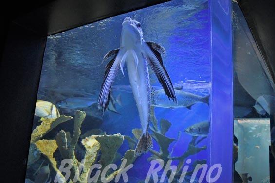 フライングガーナード02 サンシャイン水族館