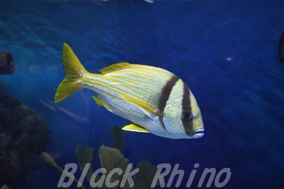 ポークフィッシュ01 サンシャイン水族館