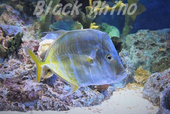 ルックダウン01 サンシャイン水族館