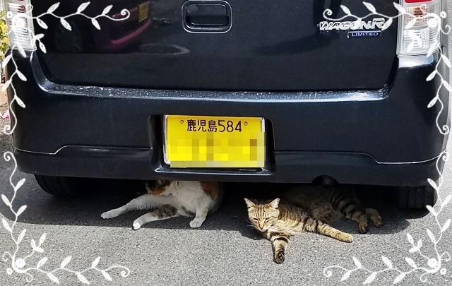 車の下にネコ