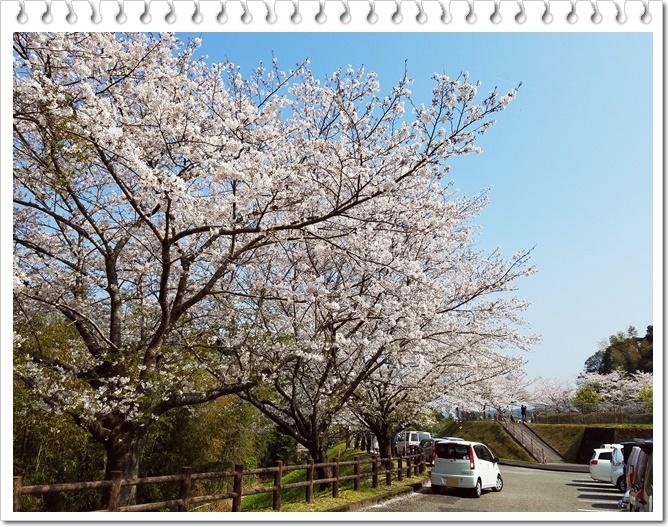 城山公園桜1-3