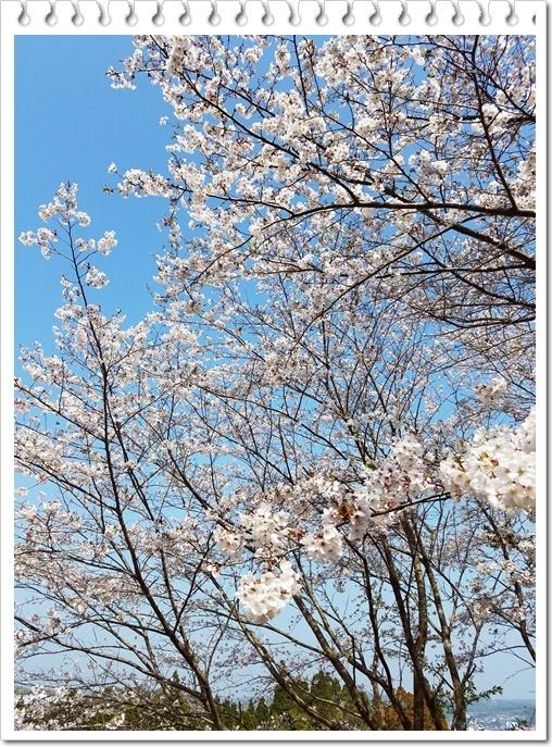 城山公園桜1-4