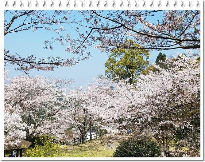 お花見公園1-2