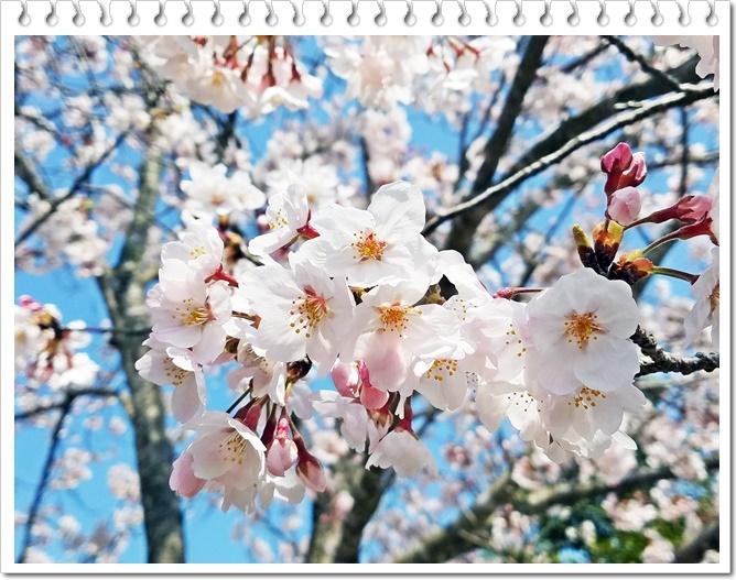 お花見公園1-4