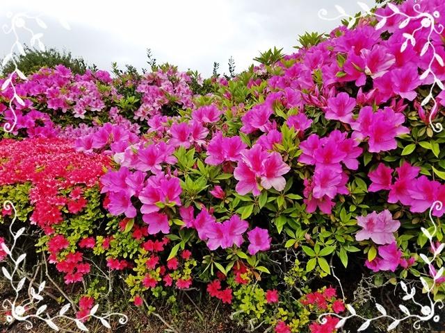 春の花1-1