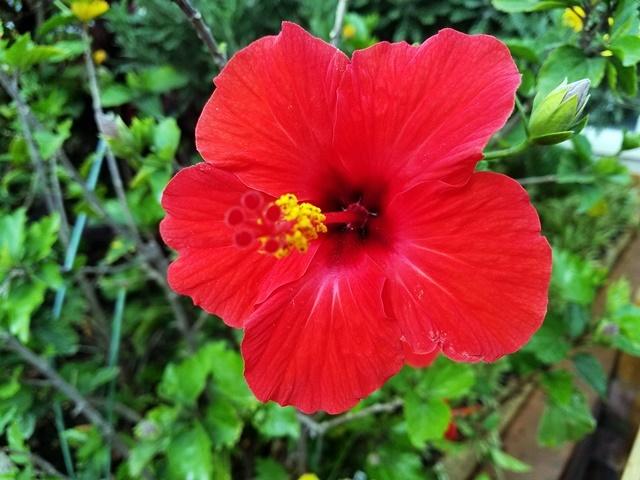 夏の花1-1