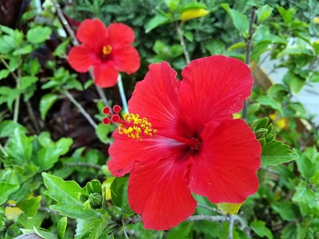夏の花1-2