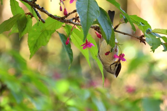 花鳥風月(5)