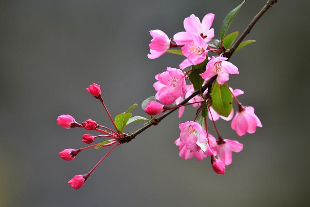 花鳥風月(1)