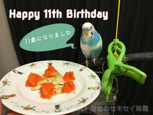空色のセキセイ珠霞 誕生日 インコ セキセイインコ 11歳