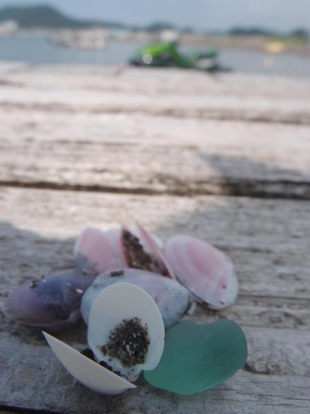 20150905貝殻