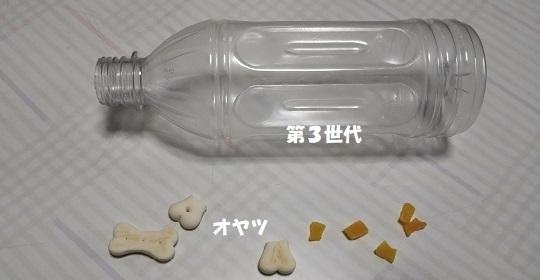 ペットボトルとオヤツ