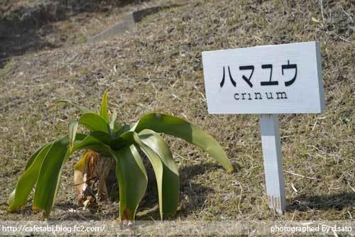 宮崎県 日南市 サンメッセ日南 モアイ像 イースター島公認 絶景 ランチ ペットOK 宗教施設 16