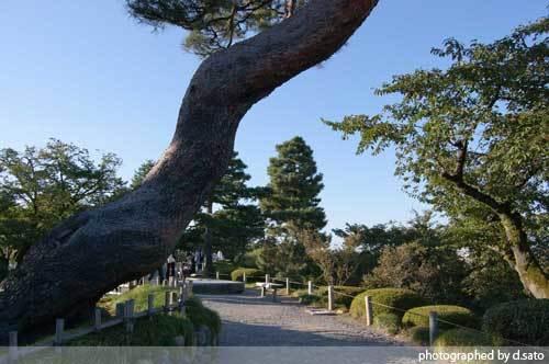 石川県 金沢市 兼六園 日本有数の名園 文化財指定庭園 特別名勝 駐車場 混んでいた 06