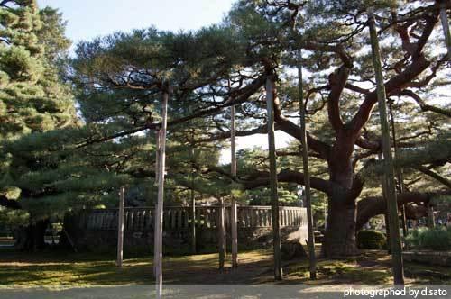 石川県 金沢市 兼六園 日本有数の名園 文化財指定庭園 特別名勝 駐車場 混んでいた 07