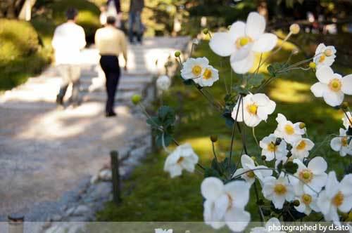 石川県 金沢市 兼六園 日本有数の名園 文化財指定庭園 特別名勝 駐車場 混んでいた 18