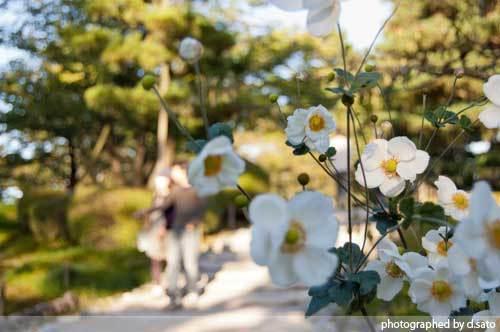 石川県 金沢市 兼六園 日本有数の名園 文化財指定庭園 特別名勝 駐車場 混んでいた 19
