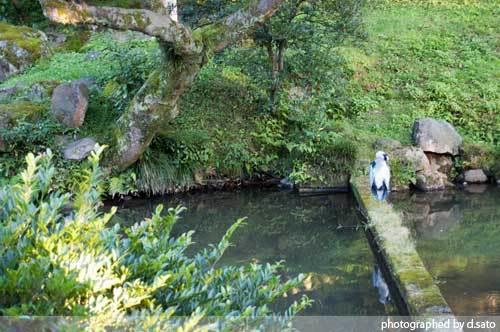 石川県 金沢市 兼六園 日本有数の名園 文化財指定庭園 特別名勝 駐車場 混んでいた 29