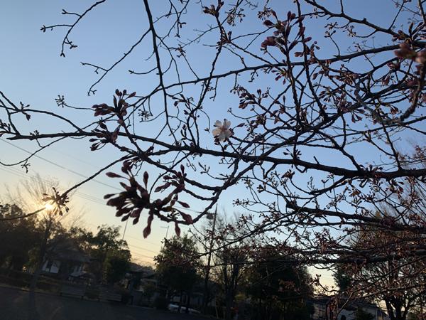 01標準木