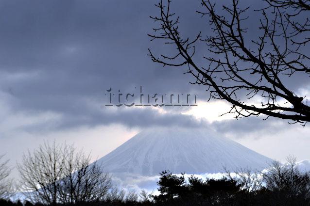 朝霧高原の富士