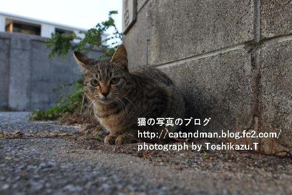 IMG_4867s.jpg
