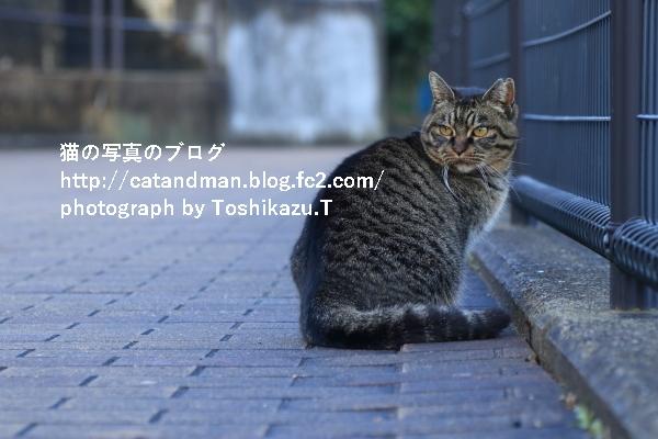 IMG_7353s.jpg