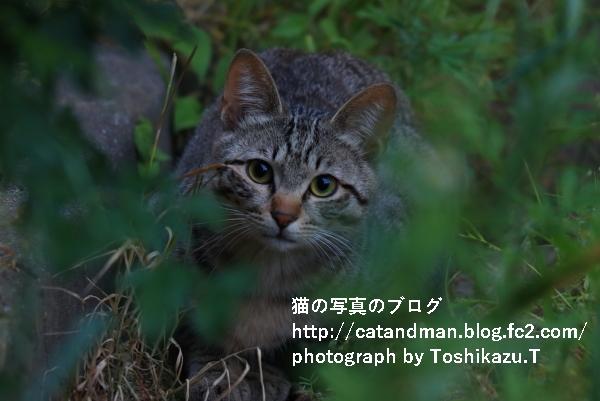 IMG_7977s.jpg