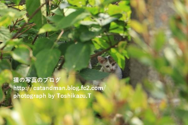 IMG_9460s.jpg