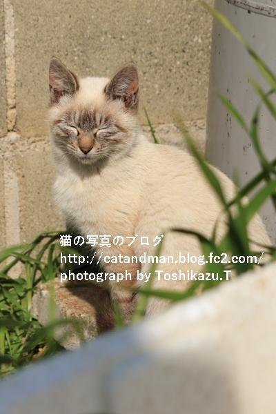 IMG_9707s.jpg