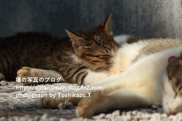 IMG_97962s.jpg