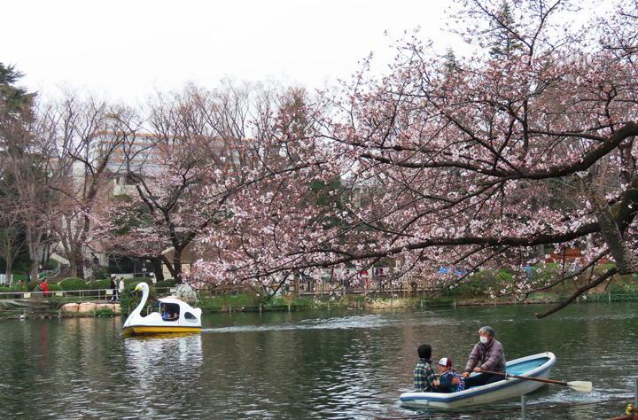 井の頭公園の桜-403