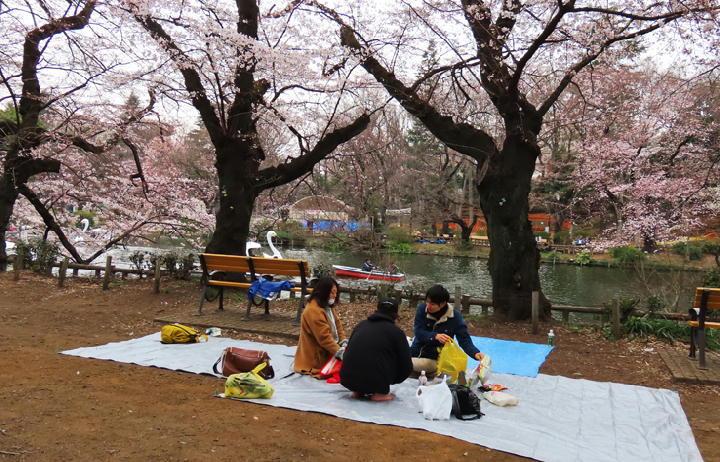 井の頭公園の桜-380