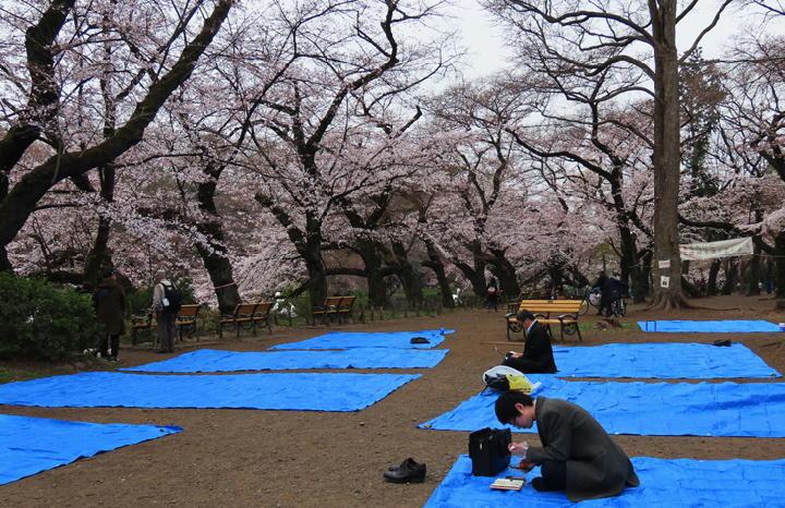 井の頭公園の桜-399
