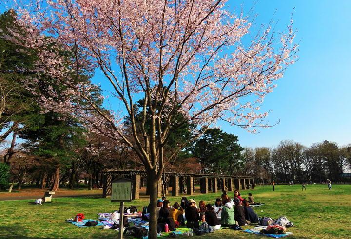 小金井公園-506