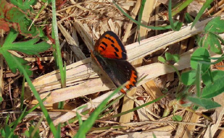 蝶々-072