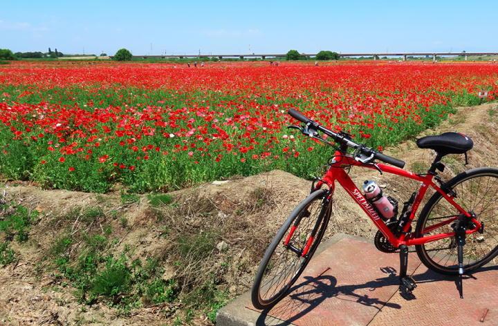 赤い自転車-369